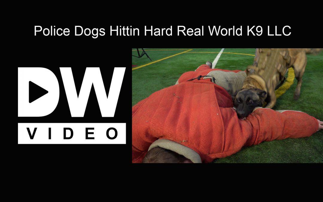 Real World K-9 Training